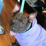BARCS Hosting Valentine's Day Open House