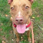 Sire, MacArthur and Ricky Available at BARCS!