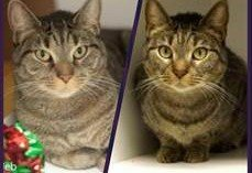 Jeb, Jade, Libby, and Tangerine Available at BARCS!