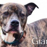 Gianni, John and Jahston Available at BARCS!