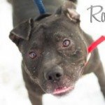 Roddy, Shara and Max Available at BARCS!