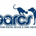 BARCS Assumes Responsibility for Over 70 Dogs from Dogfighting Ring