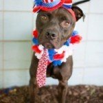 Dudley, Chessie and Dan the Man Available at BARCS