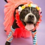 Yaya, Wells and Tarquinn at BARCS Looking for their Forever Home