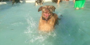 Pictures from the Riverside Park Pool Dog Swim