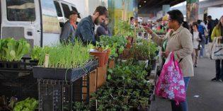 Baltimore Farmers' Market & Bazaar Returns This Sunday