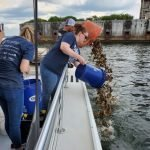 Great Baltimore Oyster Partnership Surpasses 1 Million Oysters Grown in the Baltimore Harbor