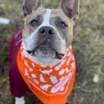 BARCS' Five-Year-Old DAS SPAGHETS Looking for Her Forever Home