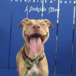 BARCS' Pumpkin is Looking for a Forever Home Before Halloween