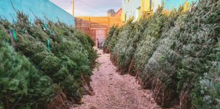 Where to Get Christmas Trees Around South Baltimore