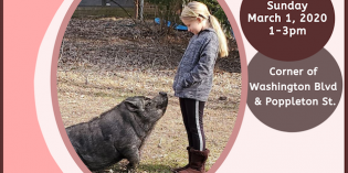 Pigtown Main Street Celebrating National Pig Day on March 1st with a Pig Petting Zoo