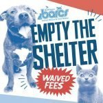 BARCS Receives a Donation to Waive Adoption Fees Before its Upcoming Move to Cherry Hill